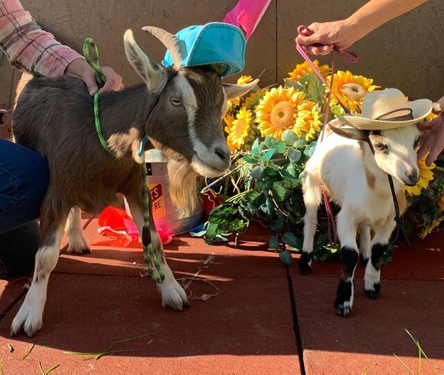 A family-run, family-friendly petting zoo has opened in Chase - Kamloops News