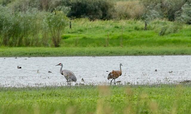 The Kamloops Naturalist Club will soon get a wildlife viewing platform - Kamloops News