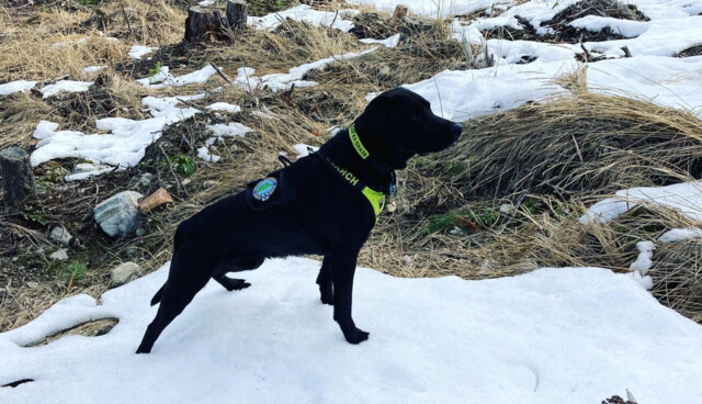COSAR and its new search dog assist police in locating a missing woman
