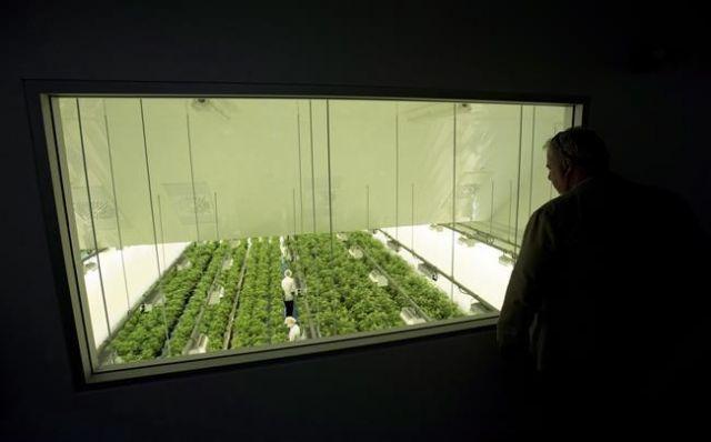Australian pot company Little Green Pharma buys Canopy Growth facility in Denmark - Business News - Castanet.net