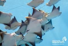 The Last Hoo-Ray at Vancouver Aquarium 2042ce2faa